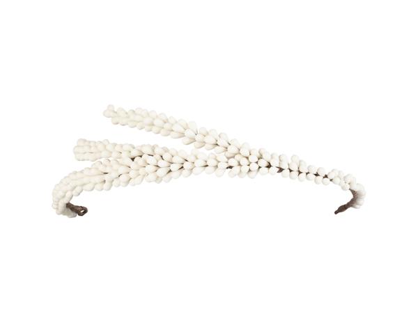 corona pistilos blancos